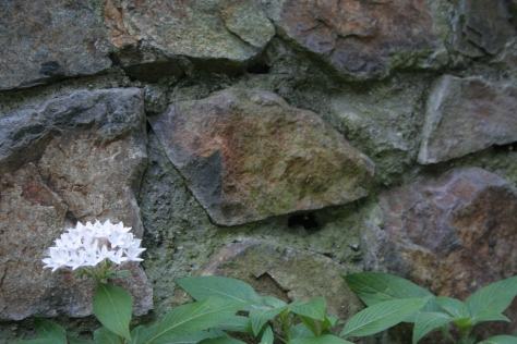white flower stone wall